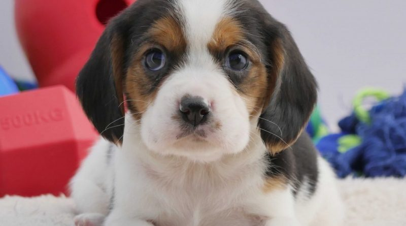Welcome a new dog into your home
