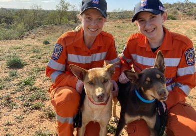 SES canine search team finds success as kelpie-training recruits named cadets of the year