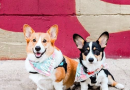 A List of Dog-Friendly Breweries + Wineries in North Jersey